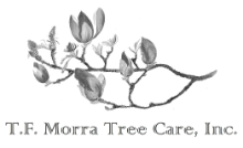 tf morra tree care inc